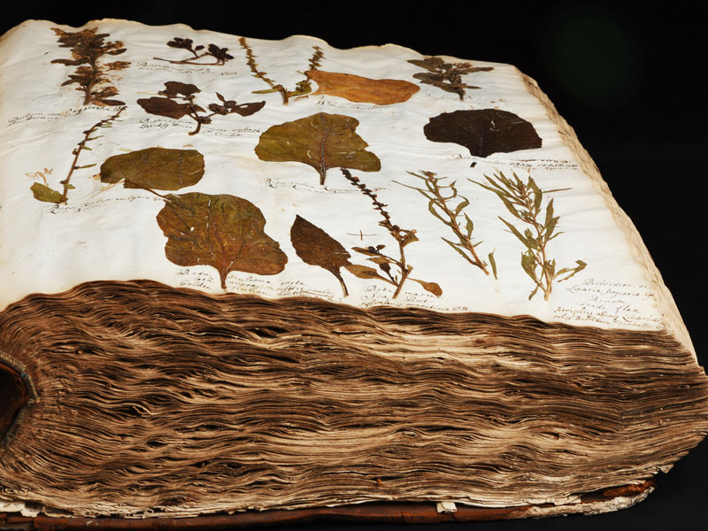 Herbarium of Bobart the Elder, founding collection of the Oxford University Herbaria © University of Oxford