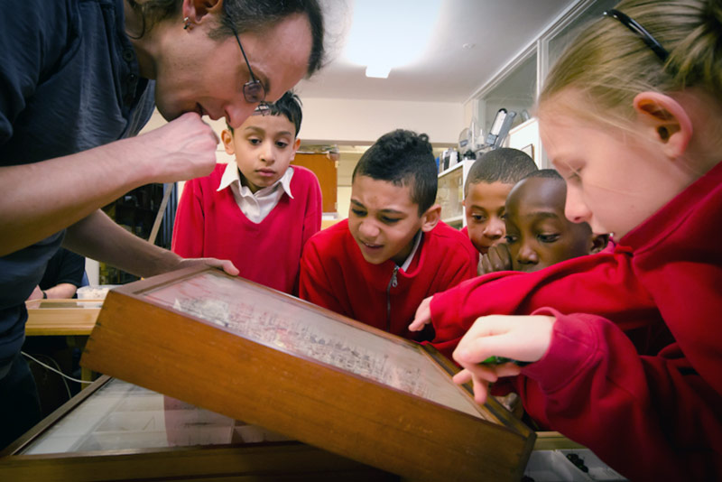 A school visit to the British Insect Collection at the Oxford University Museum of Natural History. Photo courtesy of OUMNH