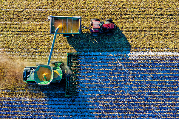 A combine harvester and a tractor harvesting crops in a snow-dusted field